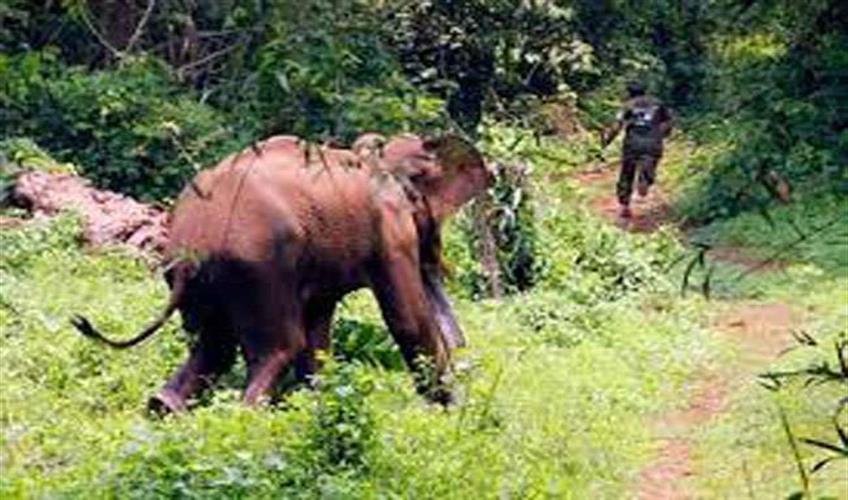 Khabar East:Elephants-tramples-a-man