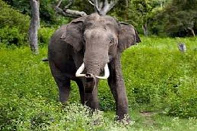 Khabar East:Wild-elephant-crushed-a-woman-who-went-to-the-toilet-to-defecate-condition-critical